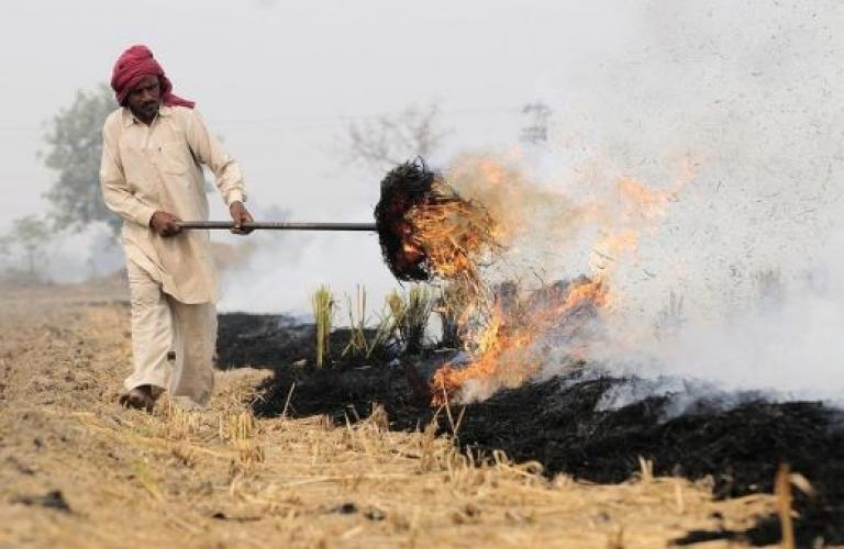15-day campaign against crop residue burning concludes