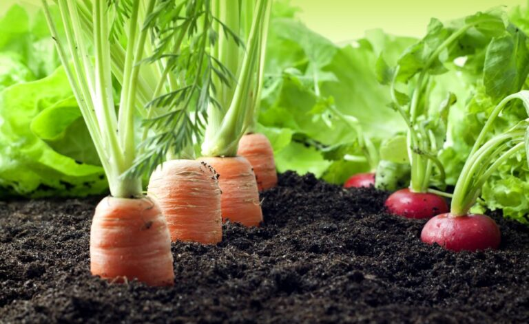 Centre certifies 14,491 ha area in A&N Islands as organic production hub