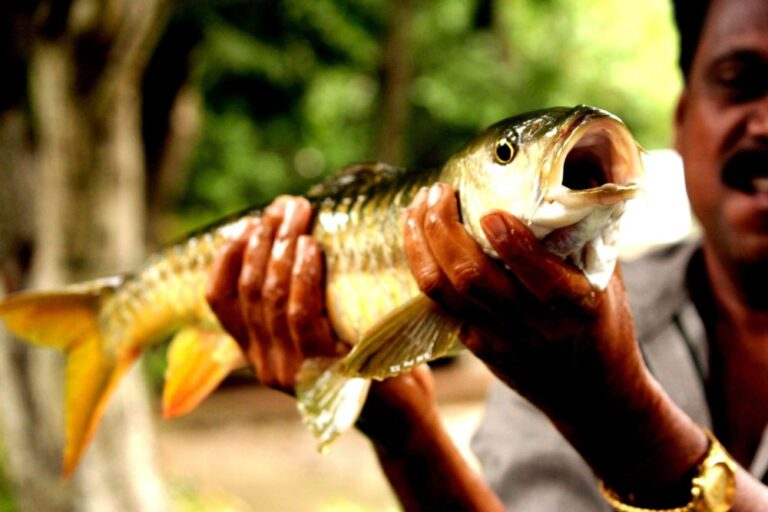 50 Years of conserving Mahseer, now off the ICUN red list