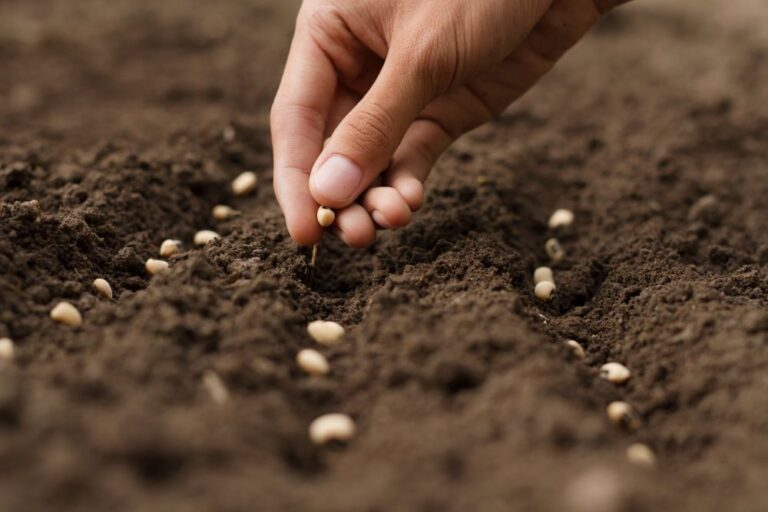 'Centre to safeguard farmers' interest while addressing all issues of seed industry'