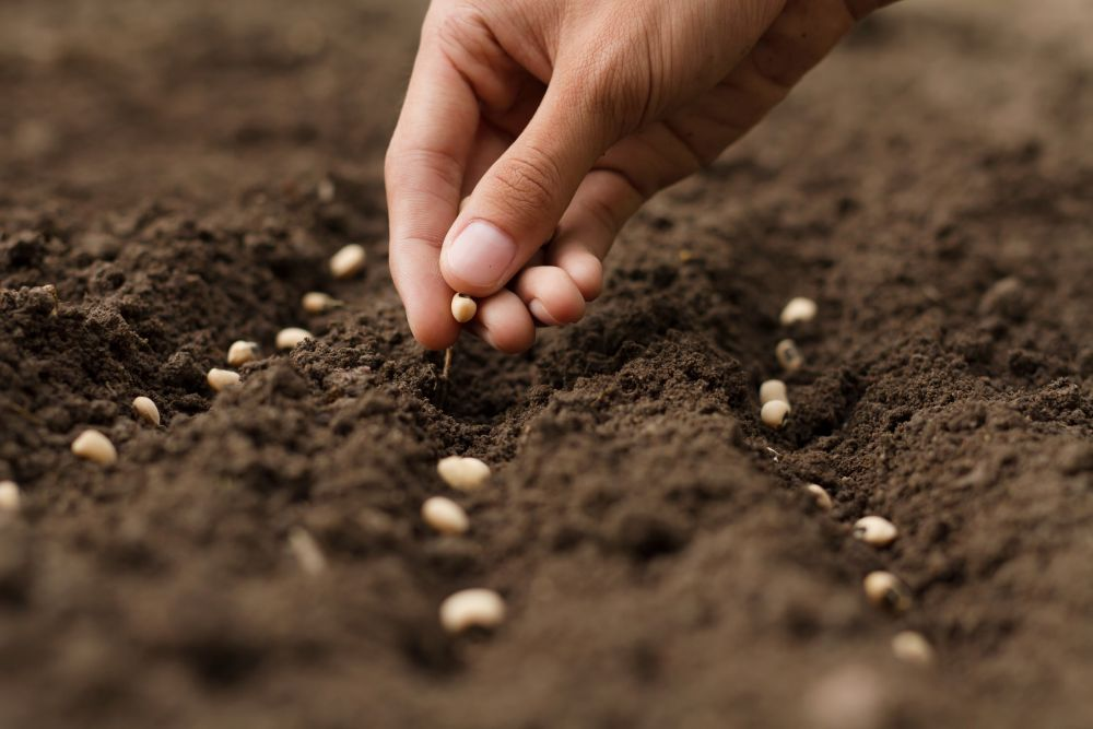 'Centre to safeguard farmers' interest while addressing all issues of seed industry' (Representational Image: Shutterstock)