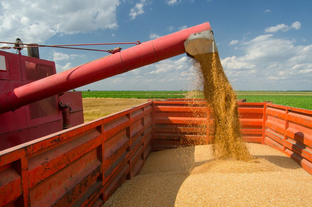 Cabinet approves modifications in Agriculture Infrastructure Fund (Representational Image: Shutterstock)