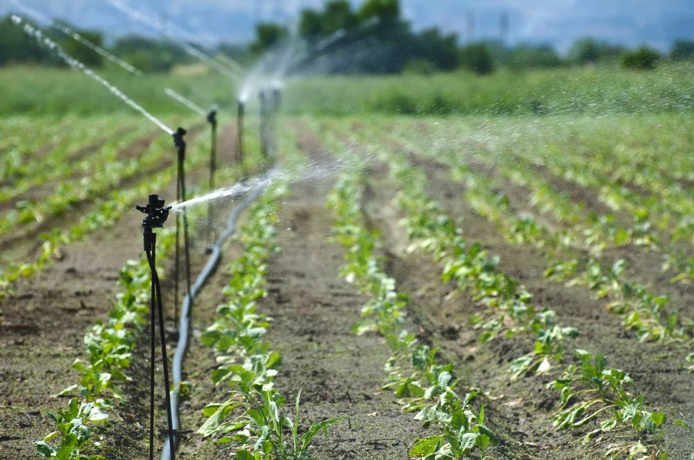India, EU talk on roadmap for cooperation in agriculture (Representational Image: Shutterstock)