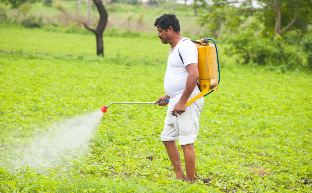 Nano urea gets special focus from the government (Representational Image: Shutterstock)
