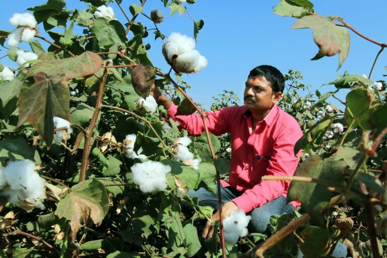 Scientific agriculture practices to drive global demand towards Indian cotton farmers